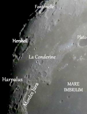 HarpalusHarpalus